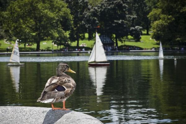 Estanque para botes de Central Park