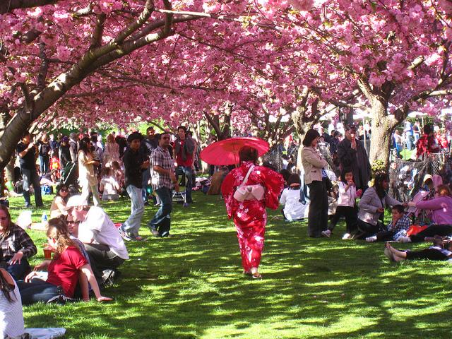 Sakura Matsuri, Brooklyn Botanic Garden