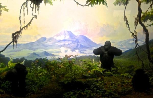 Diorama, Museo de Historia Natural