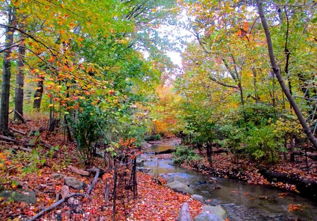 Central Park Autumn, NYC